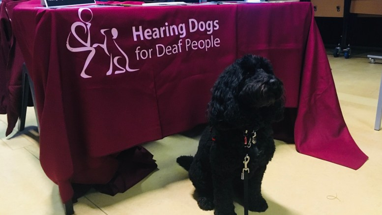 Hearing dog Beck supports deaf people to live independently