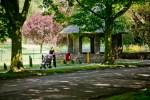 Pickering Park in Hull