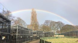 AEC rainbow
