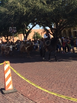 Fort Worth Stockyards Cattle Drive by Fort Worth Financial Advisor Hull Financial Planning
