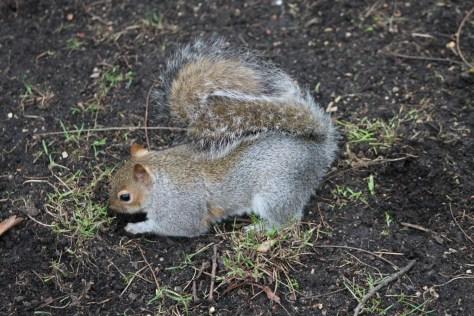 Squirrels: Nature's Real Gardeners - Humane Gardener