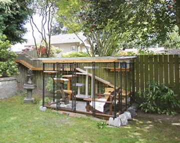 the catio craze the humane society of