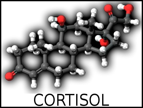 human frequencies cortisol
