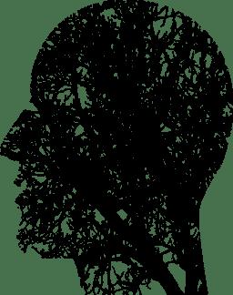 Brain Transparent Human (2)