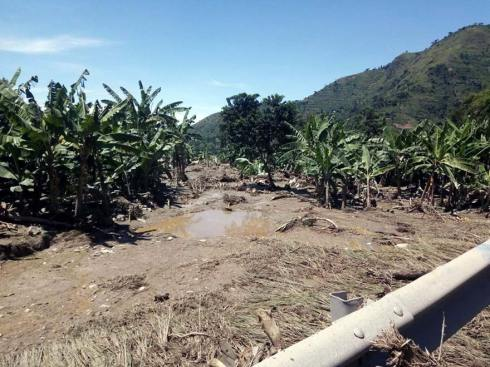 Beschädigte Baum- und Getreideanpflanzungen der Schulen