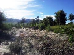 Auch hier wurde ein Teil der Bananenpflanzen and Eukalyptusbäume weggespült.