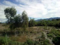 Eine beschädigte Bambus- und Eukalyptusplantage der Humanistischen Schulen.