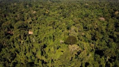 35 « Ecorégions prioritaires, - l'Australie, l'Amazonie (photo), l'Est de l'Himalaya, les Galápagos ou encore le bassin du Yang-Tsé-Kiang- ont été étudiées WWF pour leur richesse variétale ou le nombre d'espèces en voie de disparitions qu'elles abritent. Photo : AFP