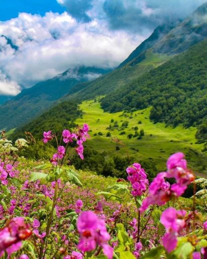 10 Best and Beautiful Valley in Uttarakhand Valley Of Flowers