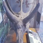 Big Bend National Park Fossil Discovery Exhibit 20