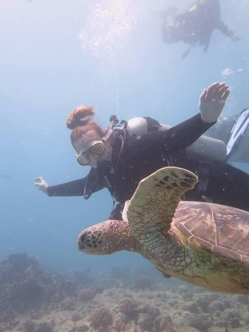 Hawaiian Vacation Sea Turtle Closeup - Scuba Diving With Nomads