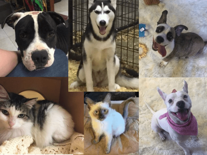 a pets wish collage