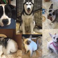 A Pet's Wish – Nomads Volunteer At Del Rio Animal Rescue In Texas