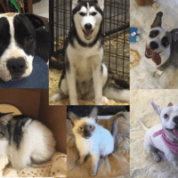 A Pet's Wish – Nomads Volunteer At Del Rio Animal Rescue In Texas