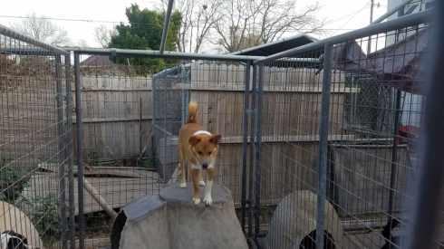 A Pet's Wish - dog on igloo