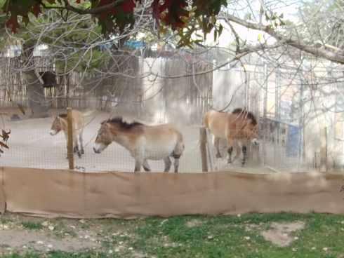 horses el paso zoo 3