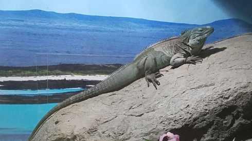 lizard el paso zoo 3