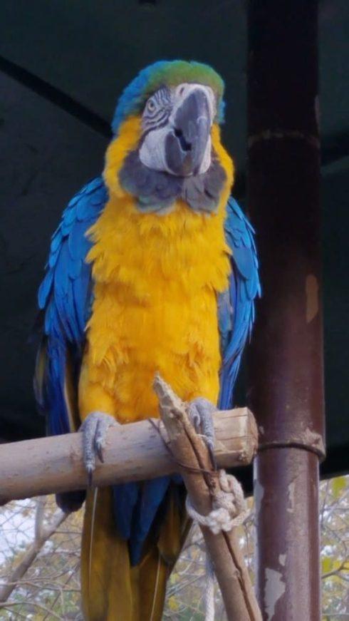 parrot el paso zoo3