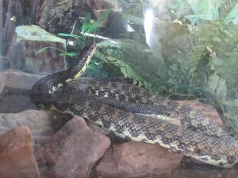 snake el paso zoo 1