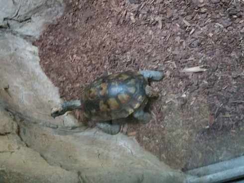 turtle el paso zoo