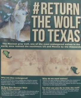 wolf sign el paso zoo