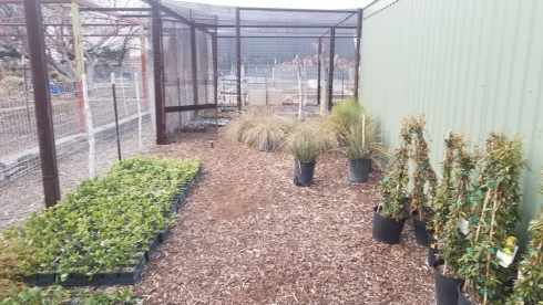 plant and tree nursery at Gage Gardens