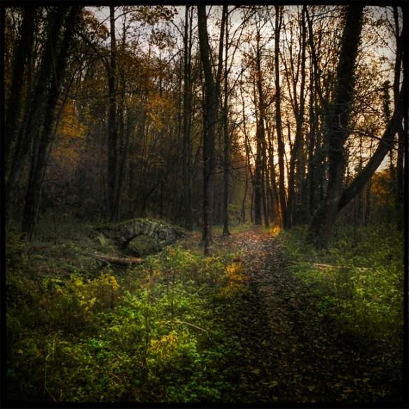 automne_01_011213