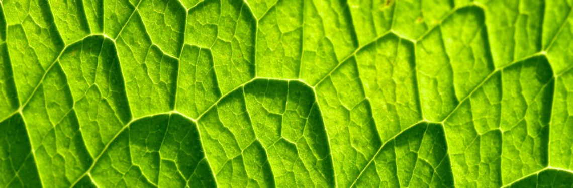 Humic fulvic acid benefits on photosynthesis, respiration and enzyme activity