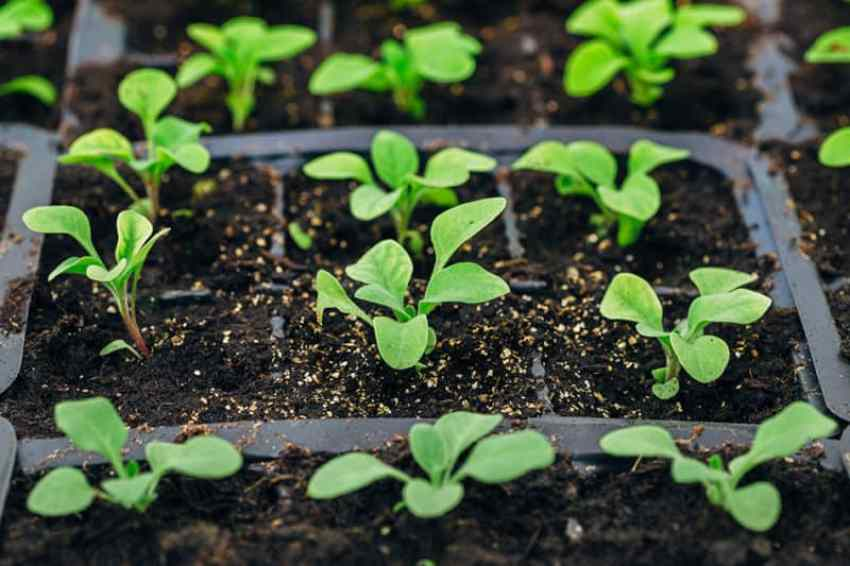 How to use humic acid for plants and quality standard of humic acid.