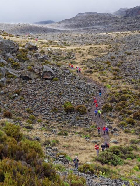 Der Tross bewegt sich nach unten in Richtung Horombo Hütten