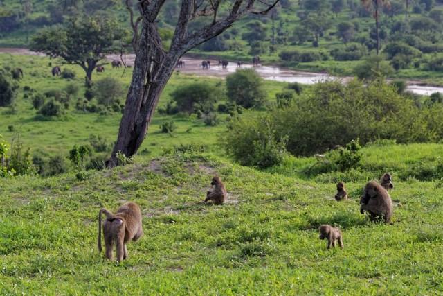 Affenfamilie beim Speisen