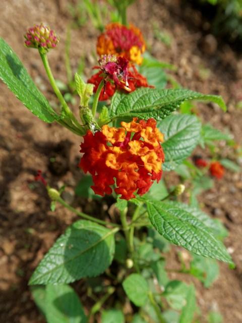 Zur Abwechslung etwas Flora