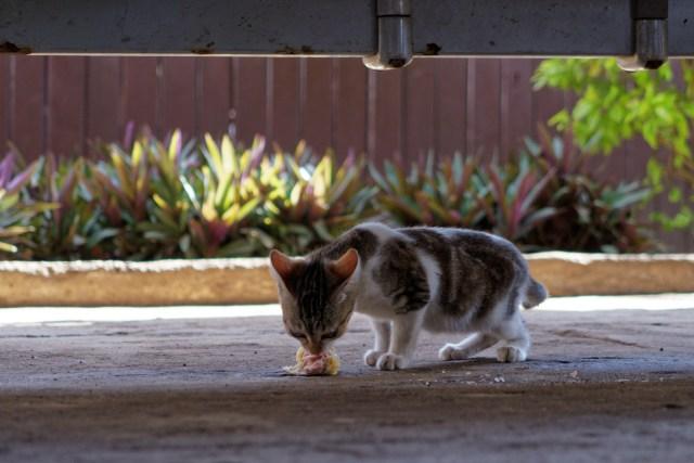 Die Airport-Katze sorgt dafür, dass keine Essensreste liegen bleiben