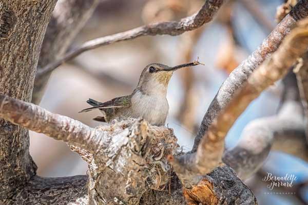 Hummingbird Predators Snakes