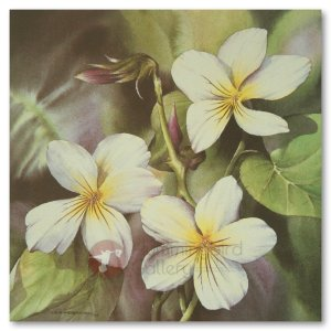 Hummingbird Gallery Les-Weisbrich-Canadian-Violet-Viola-Canadensis-1-Image Les Weisbrich <p>Flower Series<p>Limited Editions Currently Available