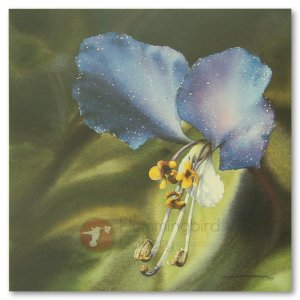Hummingbird Gallery Les-Weisbrich-Common-Dayflower-Commelina-Communis-1-Image Les Weisbrich <p>Flower Series<p>Limited Editions Currently Available