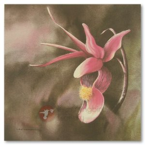 Hummingbird Gallery Les-Weisbrich-Fairy-Slipper-Calypso-Calipso-Bulbosa-1-Image Les Weisbrich <p>Flower Series<p>Limited Editions Currently Available
