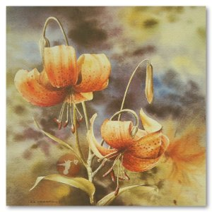 Les Weisbrich - Tiger Lily