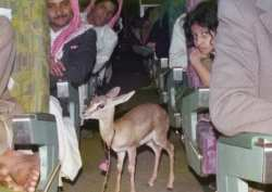 saudi airlines 1b