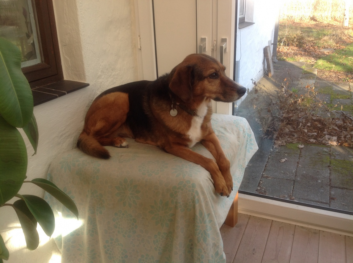 Hjemmelavet Mad Til Hund Med Kronisk Nyresvigt Foder Hunde Forum Dk