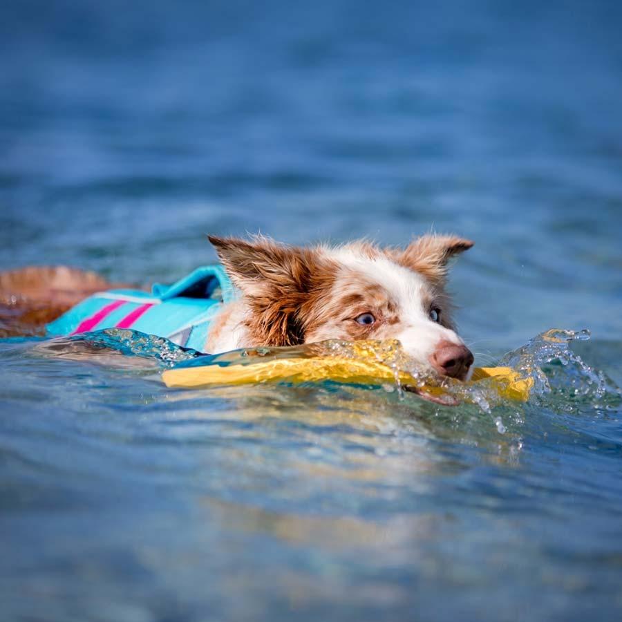 Hundeartikler legetøj