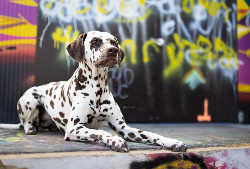 Hundeshooting München