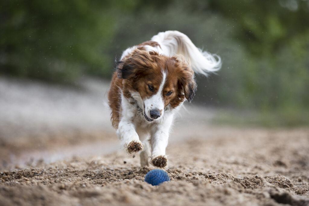 Hundefotografin Mu%CC%88nchen FinntasticMomentsKatrinSchwurack 442Druck