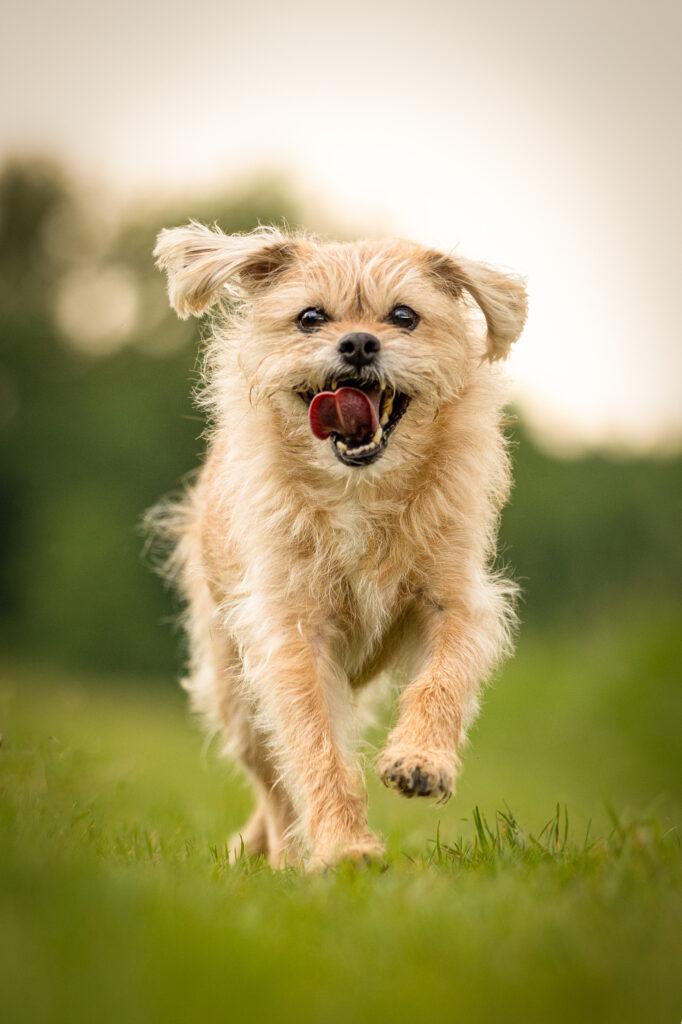 Hundefotografin Mu%CC%88nchen Hd Timi 148Druck