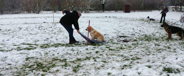Hundebespaßen