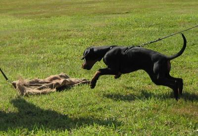 2009 - Schutzhundkurs