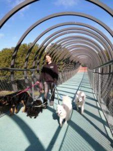 Lisa mit vier Hunden. Alle respektieren sie und nehmen Rücksicht zum Wohle aller.