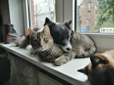 Wenn der Hund jagt: Zu Hause lebt er friedlich mit den Katzen zusammen.