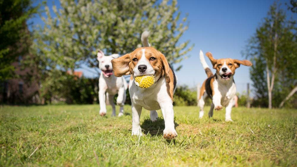 Dogwalker Ausbildung Hundesitter werden Hundetrainer Ausbildung Hundepension eröffnen