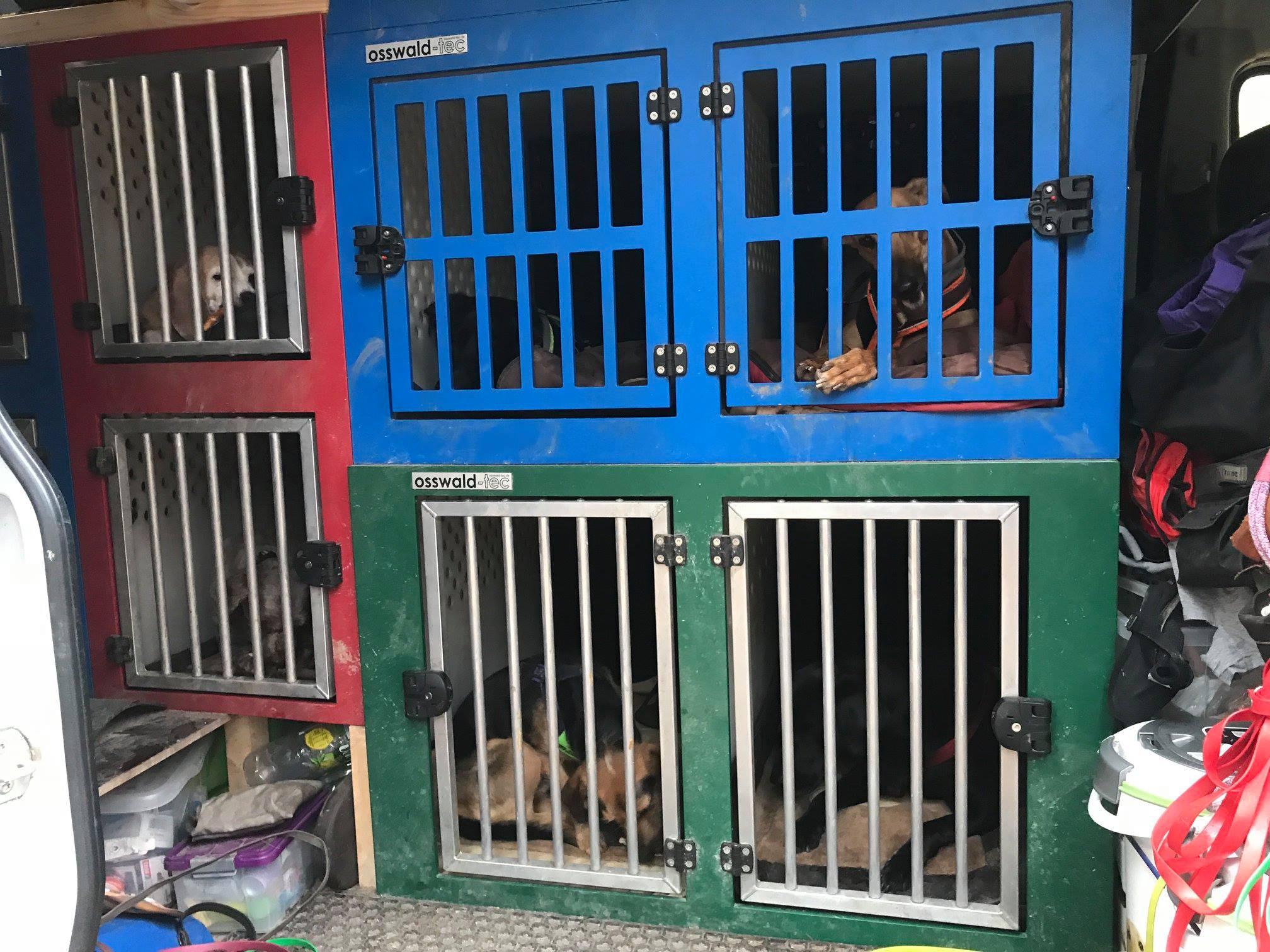 Job Dogwalker Hundeboxen Hundesitter Auto Hundeauto Dogwalking Fahrzeug